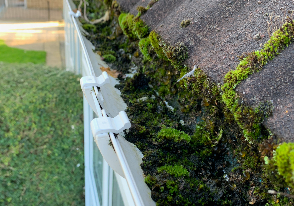 before gutter cleaning